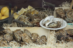 Fleshly opened oysters Royalty Free Stock Photo