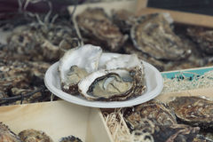Fleshly opened oysters Royalty Free Stock Images