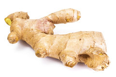 Fleshy fragrant ginger root. Studio Photor Royalty Free Stock Photos