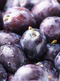 Fleshy plums. Fleshy wet plums close up as a background Stock Photography