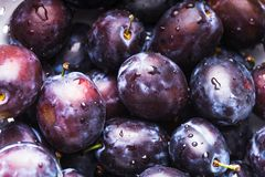 Fleshy plums. Fleshy wet plums close up as a background royalty free stock photography