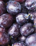 Fleshy plums. Fleshy wet plums close up as a background Royalty Free Stock Photo
