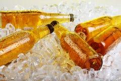 Flessen bier dat in het ijs ligt Royalty-vrije Stock Afbeeldingen