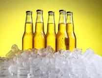 Flessen koud en vers bier met ijs Stock Foto