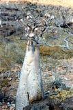 Flessenboom Royalty-vrije Stock Afbeelding