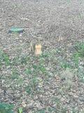 Flessione dello scoiattolo fotografia stock libera da diritti