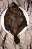 Flet aux yeux gauches de lethostigma de Paralichthys de flet du sud, vers le haut de côté Sur le fond blanc photos stock
