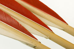 Fletches of three bow arrows. Red and white fletches of three long bow arrows isolated on white Royalty Free Stock Photos