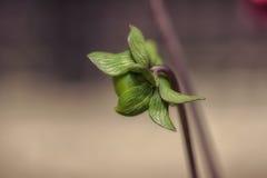 Fleur à être Image stock