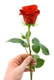 Fleur à disposition Photographie stock libre de droits