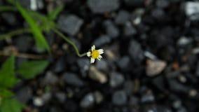 Fleur à l'arrière-plan de roche Images stock