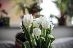Fleur à l'intérieur de la maison Photos libres de droits