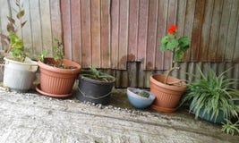 Fleur à la maison Photos libres de droits