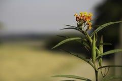 Fleur à la route Image stock