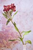 Fleur à un arrière-plan de vase Photo stock