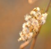 Fleur éclairée à contre-jour Photo stock