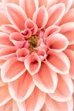 Fleur élégante Photo stock