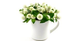 Fleur éternelle de globe sauvage Photos libres de droits