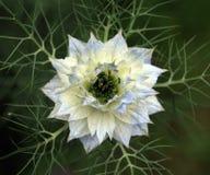 Fleur étrangère Photographie stock libre de droits
