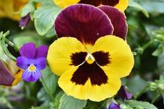 Fleur étrange Image libre de droits