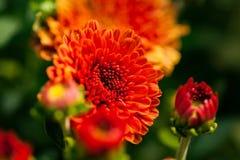 Fleur étroite Photographie stock libre de droits