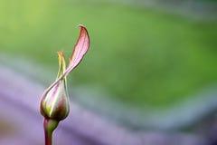 Fleur étroite de macro Photographie stock libre de droits