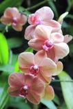 Fleur 14 étroits Photos libres de droits