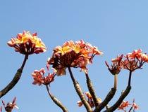 Fleur 06 photos libres de droits