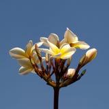 Fleur 07 Image libre de droits