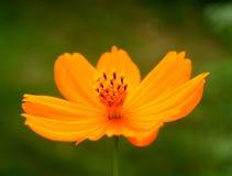 Fleur 10 image libre de droits