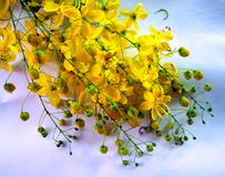 Fleur 115 Images stock