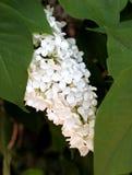 Fleur 013 Photos libres de droits