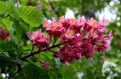 Fleur 008 Image libre de droits
