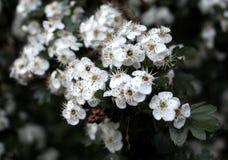 Fleur 004 Photos libres de droits