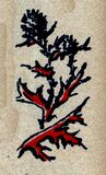 fleur-12 Stock Image