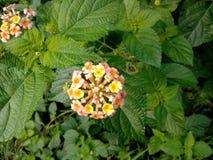 Fleur images stock
