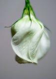 Fleur 2 Images libres de droits