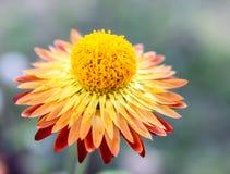 Fleur. Images stock