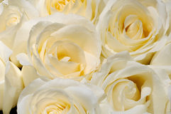 Fleur 38 Image stock