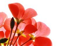 Fleur Photos stock