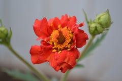 Fleur 14 Images libres de droits