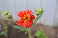 Fleur 11 Images libres de droits