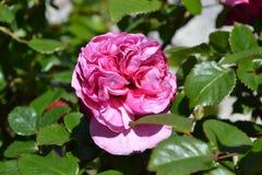 Fleur 2 Photos libres de droits