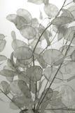 Fleur. Photographie stock libre de droits