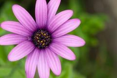Fleur. Image stock