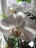 Fleur 2 Photo libre de droits