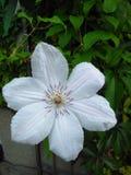 Fleur 1 Photographie stock