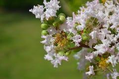 Fleur Photo libre de droits