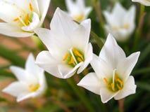 Fleur 91 Photo stock
