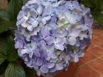 Fleur 01 Images libres de droits